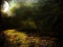 Magic night (BirgittaSjostedt) Tags: forest pond magic fairytale tale moon fullmoon light water mysterious watyerlily lily