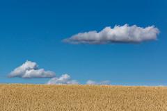 Mecklenburger Landschaft (tleesch) Tags: drausen feld flachland kontrastarm landwirtschaft natur ort sonstiges blau kletzin mecklenburgvorpommern deutschland de