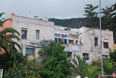 Ікод-де-лос-Вінос, Тенеріфе, Канарські острови  InterNetri  158
