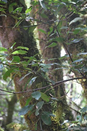 Національний парк Гарахонай, Гомера, Канарські острови  InterNetri  0711