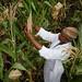 Tigist Masresra, technical assistant, Highland Maize Breeding Program