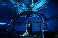 The way you're bathed in light. (Sean Molin Photography) Tags: ashleygriffith downtownindianapolis downtownindy indianapoliszoo wedding yenlingho dolphins dolphindome nikond810 nikon24mm 24mm wideangle underwater brideandgroom