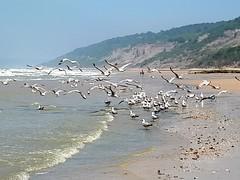 ENVOL DE MOUETTES (past ' Elle) Tags: plage mouettes colline mer bleu sable vagues ciel