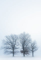frozen threesome (marcuslange) Tags: frozen threesome tree nature naturephotography landscape landscapephotography landschaft minimalistic minimalisticlandscape minimalism winter saxony germany