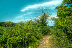 Morning Path (JMS2) Tags: nature park path walk hike topazimpression sky outdoor scenic nycparks bronx