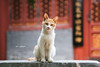 DSC01962+ (๑Kerchak๑) Tags: cat straycat streetcat meow color colour temple fayuansi china beijing cute