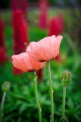 Heading Home (ROPhoto77) Tags: flowers cmbg colorful bold yellow pink purple green fresh wet morning dew
