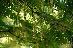 DSC01096 (g.lebloas) Tags: forêt bois arbre fleur