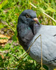Content (vernonbone) Tags: 2018 birds eastpoint february insects june lens macro march nikond3200 pigeons sigma105mm colors outside