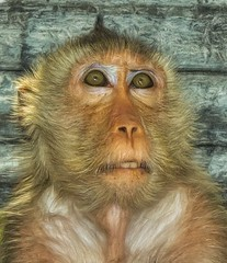 Monkey portrait (Steve4343) Tags: steve4343 monkey portrait bangkok thailand green red orange blue white look looking smile