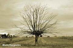 Alone (Mario.Cunqueiro) Tags: árbol soledad paisaje