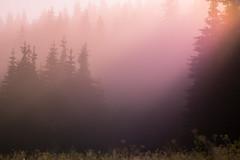 SAM_2952 (Apostol Dragiev) Tags: родопи rodopimountain rodopi mountain forest fog sunrise