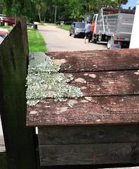 Mailbox Lichen 65 (LarryJay99 ) Tags: lichen mailbox weatheredwood woodgrain texture nature streets roads