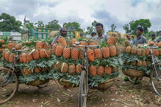 Largest pineapple market in Bangladesh
