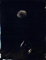 Les bulles (Troisième type) Tags: naturemorte collodion collodionhumide wetplate busch pressman 4x5 lelabodutroisieme