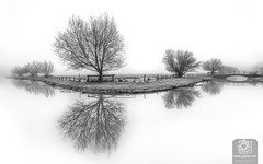 Lucreatia my reflection (Syxaxisphoto) Tags: britain british england hertford hertfordshire riverlea syxaxisphotography baretree beautiful blackandwhite branches bridge calm classic countryside dawn dramatic fog foggy frosty haze horizontal isolation land landscape loneliness mono monochrome natural nature nopeople noperson nonurbanscene patient peaceful reflection river riverbank riverside rural ruralscene scene scenery scenic spectacular still tourist tranquil tranquility tree trees uk water waterscape weather white winter wwwsyxaxiscom unitedkingdom gb