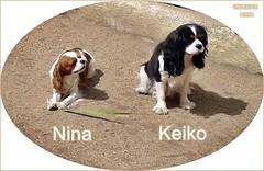KEIKO 画像34