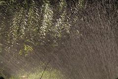 bthwaterethBloMDrbgbElobdm2010-08-30edmIMG_8065.jpg (rachelgreenbelt) Tags: ghigreenbelthomesinc usa gardening greenbelt northamerica midatlanticregion ouryard waterscape scapes manmadeobject 710natural maryland americas sprinkler