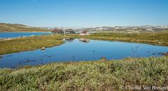 Onderweg in Noorwegen (Chantal van Breugel) Tags: landschap noorwegen hardangervidda bergen reflecties juli 2018 canon5dmark111 canon24105