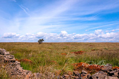 _DSC.0024 - Lonely bush... (SWJuk) Tags: swjuk uk unitedkingdom gb britain england lancashire burnley home crownpoint moors moorland countryside landscape grasses bush drystonewall 2018 aug2018 summer nikon d90 nikond90 tokina1116 wideangle bluesky clouds rawnef lightroomclassiccc