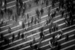 People Walking- Credit to https://www.semtrio.com/ (Semtrio) Tags: black white city crosswalk crowd defocused lanes lines long exposure modern outdoors pedestrian crossing people road street time lapse top view urban walking zebra