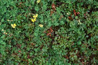 Green carpet #2
