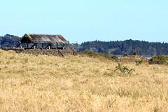 IMG_9103 (christineNZ2017) Tags: ambury regional park amburypark birdsanctuary birdlife bird sanctuary southauckland auckland newzealand winter