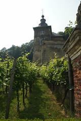 Toren met wijngaard. (limburgs_heksje) Tags: nederland netherlands niederlande limburg chateau neercanne castle schloss grens