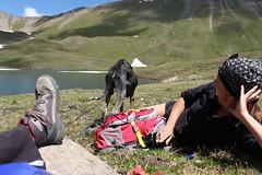 tranquilles au lac des Autannes (bulbocode909) Tags: valais suisse moiry grimentz lacdesautannes valdanniviers personnes chiens lacs montagnes nature chaussures sacs nuages névés neige vert rouge bleu