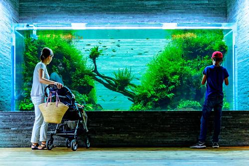 Nature Aquarium in Sumida Aquarium in Tokyo Skytree Town : 自然百景(すみだ水族館)