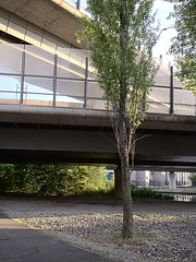 Autobahndreieck-Neukoelln_e-m10_1017295540 (Torben*) Tags: olympusm17mmf18 olympusomdem10 rawtherapee berlin neukölln britz autobahndreieckneukölln baum tree überführung overpass autobahn motorway