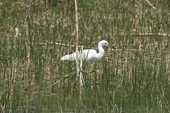flora and fauna (ucumari photography) Tags: ucumariphotography everglades nationalpark florida fl may 2018 bird yellow feet flora fauna animal dsc8364
