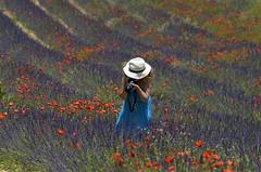 Marie au travail dans un champ de lavande (christian.man12) Tags: champ lavande coquelicots photographe marymaa coquelicot lavandes
