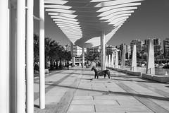 Paseo Maritimo (petia.balabanova(tnx for +3 million views)) Tags: blackandwhite bw monochrome malaga spain travel paseomaritimo andalusia shapes architecture light shadows lines pattern art city 2470mm nikond800