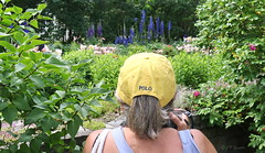 REFORD GARDENS  |  DELPHINIUM |  LILIES   |  THE LONG WALK  |  ALLEE ROYALE |    REFORD GARDENS  |   LES JARDINS DE METIS  |  METIS   |  GASPESIE  |  QUEBEC  |  CANADA (J P Gosselin) Tags: reford gardens | delphinium the long walk allee royale les jardins de metis gaspesie quebec canada canon 7d 7dmarkii rebel t2i canonrebelt2i eos canon7d markii rebelt2i canonrebel canont2i eost2i eos7d eos7dmarkii mark 2 mark2 eos7dmark2 canon7dmarkii ii canoneosrebelt2i canoneos7d canoneos ph:camera=canon lilies polo cap flickr