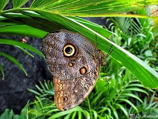 180313-28 Expo papillons en liberté
