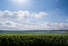 Misty morning (ZeGaby) Tags: champagne clouds exposureblending landscape marne naturephotography paysage paysagedechampagne pentax2470mm pentaxk1 vineyards vignobles