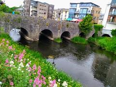 UN PONT A NAVAN (marsupilami92) Tags: irlande eire meath navan jettours leinster rivière blackwater pont bridge fleur