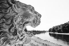 Dresden Schloß Pillnitz b&w 5 (rainerneumann831) Tags: löwe wasserspeier elbe flus landschaft schlospillnitz bw blackwhite blackandwhite ©rainerneumann
