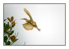 Home to the Nest (JohnKuriyan) Tags: kerala india