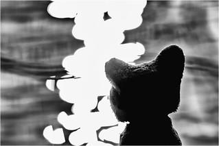 Wolfi at the water - meditating