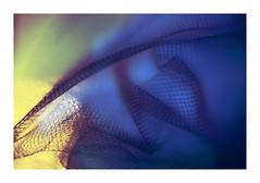 Folded (VanveenJF) Tags: helios russian kmz sony mesh mm hmm macro