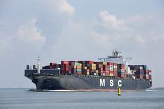 MSC VALENCIA (angelo vlassenrood) Tags: ship vessel nederland netherlands photo shoot shot photoshot picture westerschelde boot schip canon angelo walsoorden cargo container mscvalencia