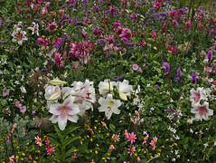 Summerflowers (diarnst) Tags: sommer summer blumen flowers bunt colorfull
