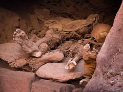 Pilgrimage (Magic Pea) Tags: photo photography magicpea ethiopia lalibela bones pilgrim travel skull macabre