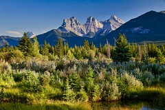 in The Light (John Andersen (JPAndersen images)) Tags: 3sisters alberta canmore goldenhour landscape mountains sunset trees