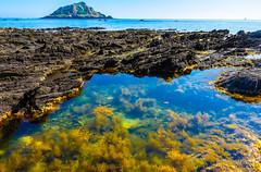 Wembury Rock Pool (JKmedia) Tags: boultonphotography 2018 coastal devon wembury uk cats ear great mewstone meowstone rock pool natural sea coast island seaweed life
