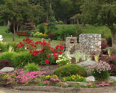 Garden drinking fountain (diffuse) Tags: petunias roses fountain bench tree park connaughthill odc blooming flowering