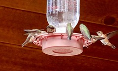 Hungry Birds (KSec) Tags: birds humming hummingbirds water wood feeder uyah uintahs uinahmountains cabin