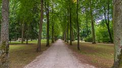 Hofgarten Bayreuth D 8.)1806-3589 (dironzafrancesco) Tags: bäume tamron bayreuthd tamronsp2470mmf28diusd slta99v hofgartenbayreuthd sony lightroomcc bayreuth bayern deutschland de